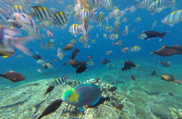 Kawasan Konservasi Perairan Daerah Karang Jeruk