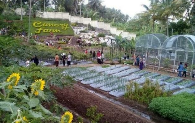 Cimory Farm Ungaran