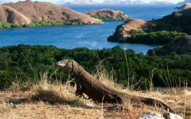 Pulau Komodo, Tempat wisata Indonesia yang Mendunia