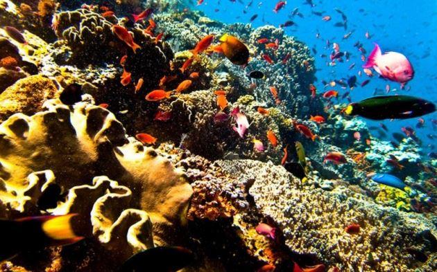 Taman laut Bunaken, Wisata Indonesia bawah laut