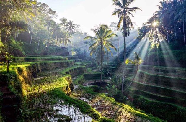 Ubud, Wisata indonesia di Bali