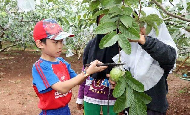 Wisata kebun buah ungaran
